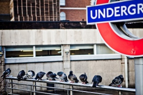 London underground with birds