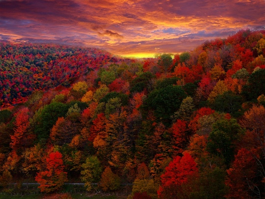 Foliage photo over the hills sunset